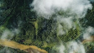Ernest Zacharevic, Save Our Souls Project SOS, Palm Oil Plantation, Sumatran. Photo Credit All is Amazing