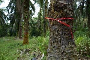 Ernest Zacharevic, Save Our Souls Project SOS, Palm Oil Plantation, Sumatran. Photo Credit Skaiste Kazragyte