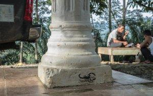 ESCIF, 'Scorpion' Splash and Burn, Sumatra 2019. Photo Credit Ernest Zacharevic